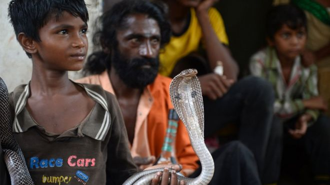 Indian cobras are among the species which kill most people each year. Photo: AFP