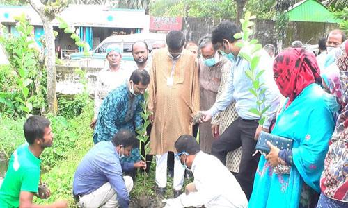 Tree plantation programme begins in Begumganj