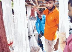 Fishing with banned net rampant at Dhamoirhat
