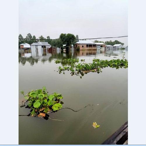 Low-lying areas in Gafargaon flooded as Brahmaputra  swelling