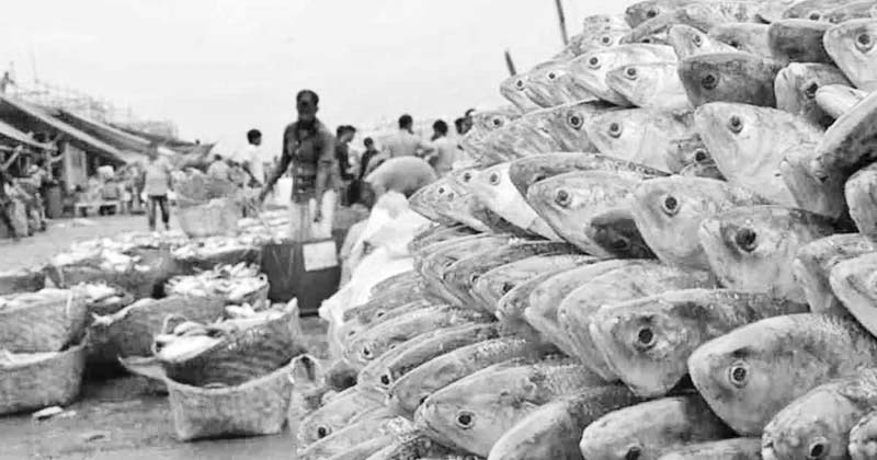 Fishers return to Bay: The ban that feeds the boom