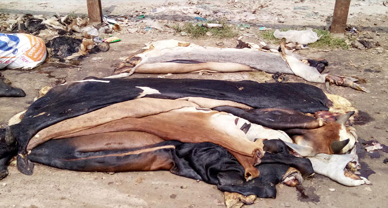 Sirajganj traders reluctant to buy rawhides