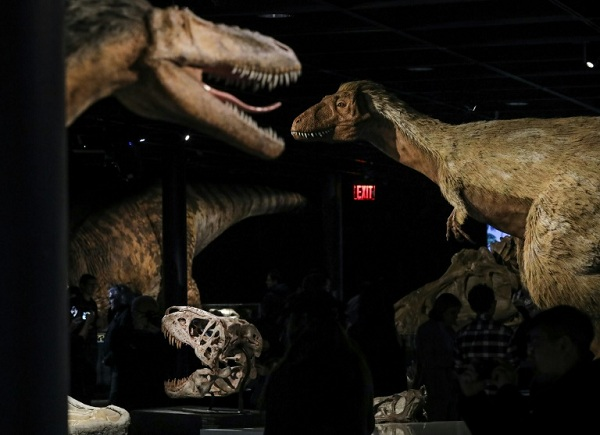 A new study identifies the first known case of cancer in dinosaurs and shows they suffered from the debilitating disease too. Photo: AFP