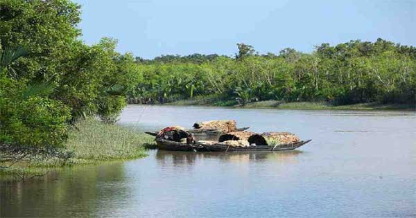 2 crab catchers killed in Sundarbans tiger attack