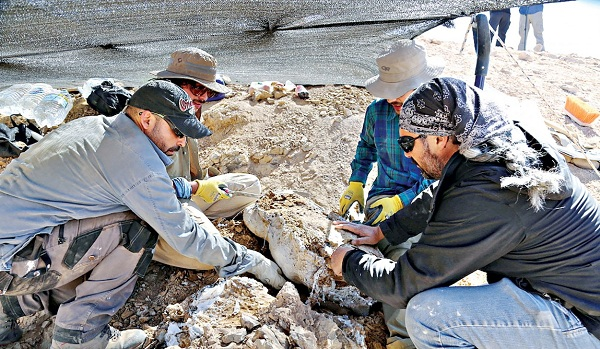 Scientists prepare to move the remains of one of the largest and most fearsome marine predators of the Jurassic period in the middle of the Atacama desert, Calama, Chile December 14, 2018. Photo: Reuters