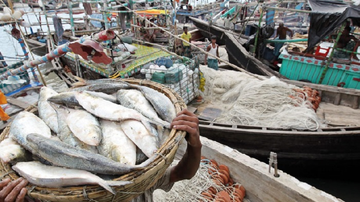 Ban on Hilsa catching from midnight
