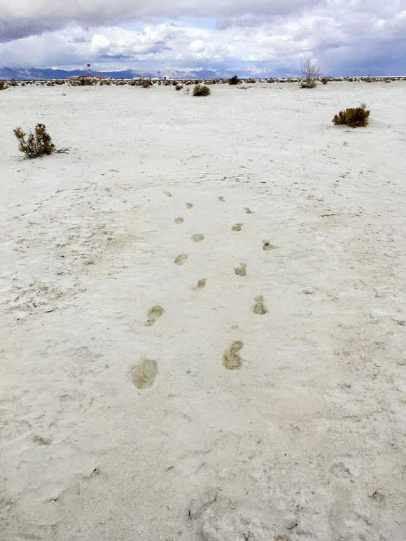 The 12,000-year-old human footprints found at White Sands National Park in New Mexico. Image credit: Cornell University.