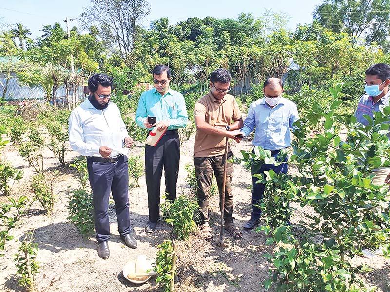 Bangladesh Tea Research Institute (BTRI) Director Dr Mohammad Ali visiting a tea garden in Mymensingh region on Saturday.
