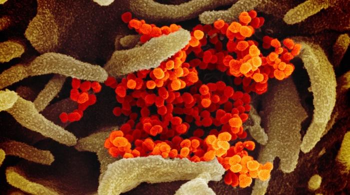 20 more die from coronavirus in Bangladesh