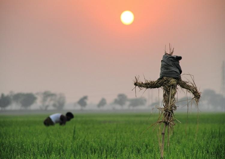 Cambodian villagers trust magic scarecrows to ward off coronavirus