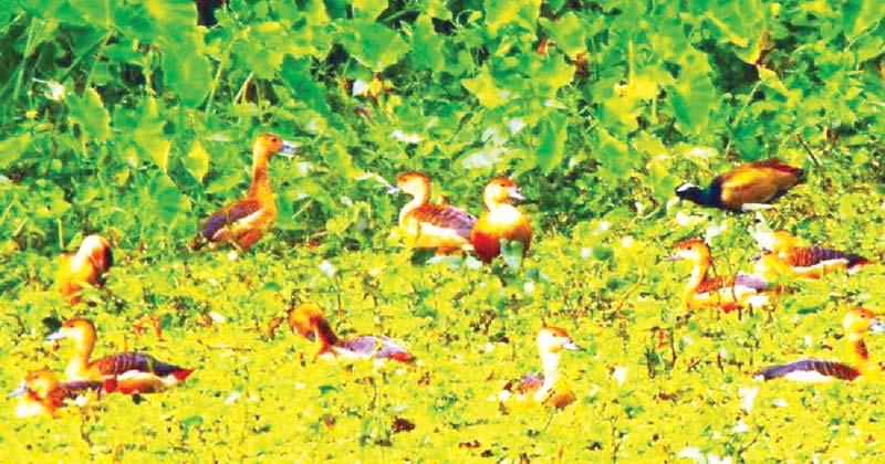 Prancing migratory birds start flocking to IU lake with fall in mercury