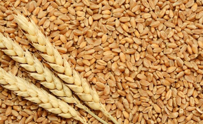 Bangladesh to buy 50,000 tons of wheat from Singapore company