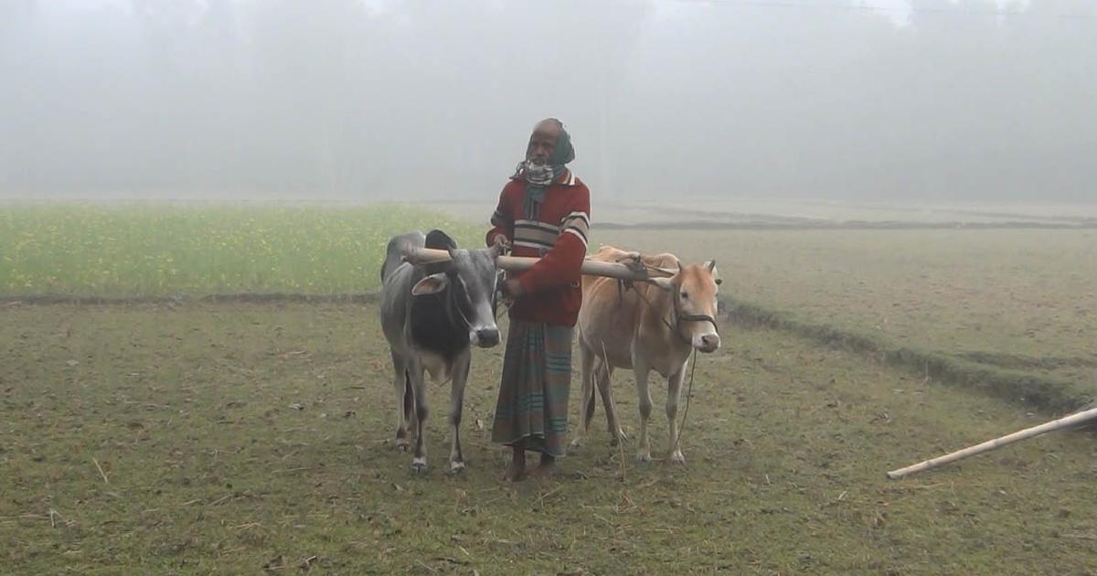 Kurigram shivers in cold