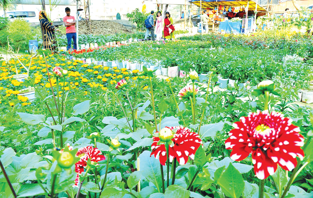 Nursery business in the country has turned around