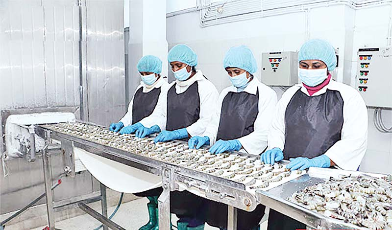 Wages for workers in shrimp sector to be reviewed
