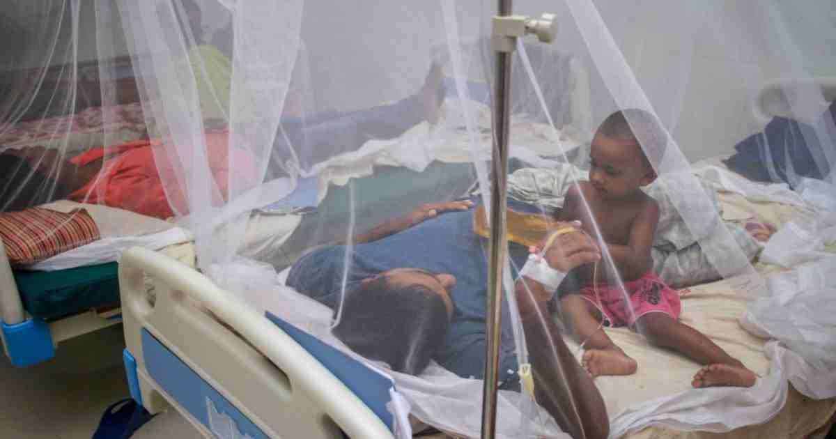 Bangladesh has zero dengue cases: Health authorities