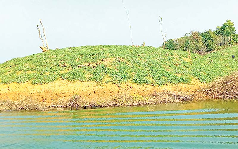 Watermelon cultivation on Kaptai hill slopes