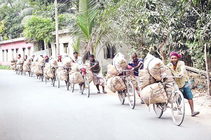 Munshiganj farmers carrying sacks of potatoes on bicycles