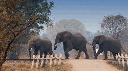 Loco pilots halt train to allow elephants to pass