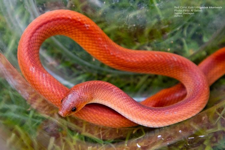 Photo: wildlife photographer Firoj Al Sabah