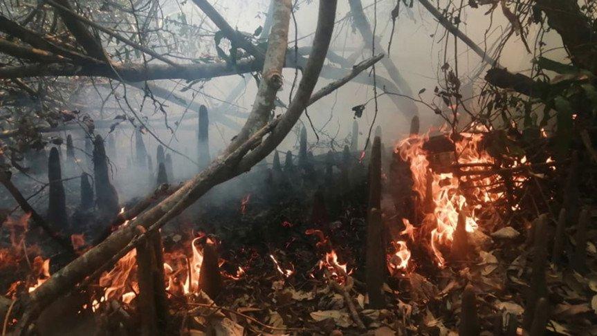 Fire breaks out in Sundarbans again