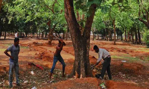 Writ filed to stop tree felling at Suhrawardy Udyan