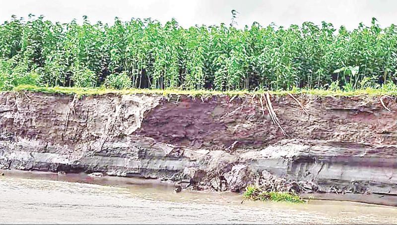 The photo shows erosion by the Teesta River in Sundarganj Upazila. photo: observer