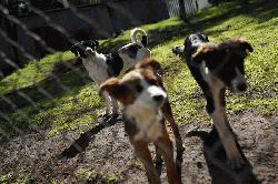 Street dogs find homes after being rescued by Mexican army