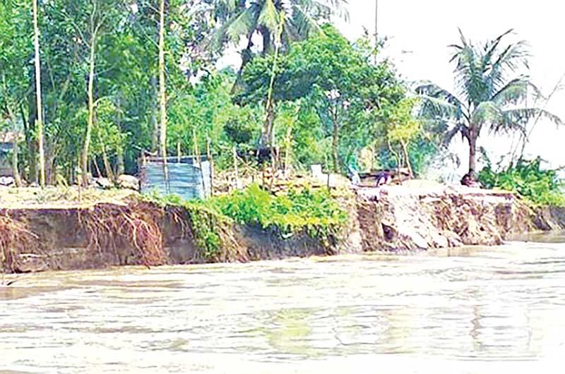 Jamuna erosion turns severe in Tangail