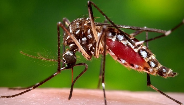 218 dengue patients admitted to hospitals in 24 hours