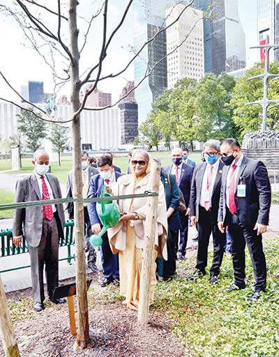 Prime Minister Sheikh Hasina sprinkles water after planting a honey locust tree on the lawn of the United Nations headquarters marking the hundredth birth anniversary of Father of the Nation Bangabandhu Sheikh Mujibur Rahman on Monday.PHOTO: PID